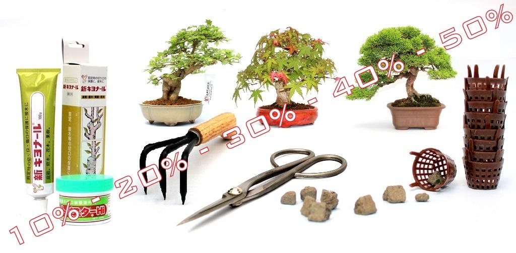 bonsai vasarlasi es rendelesi lehetoseg ajandek otlet es vasarlasi lehetoseg vasar es akcio kulonleges ajandek otletekkel