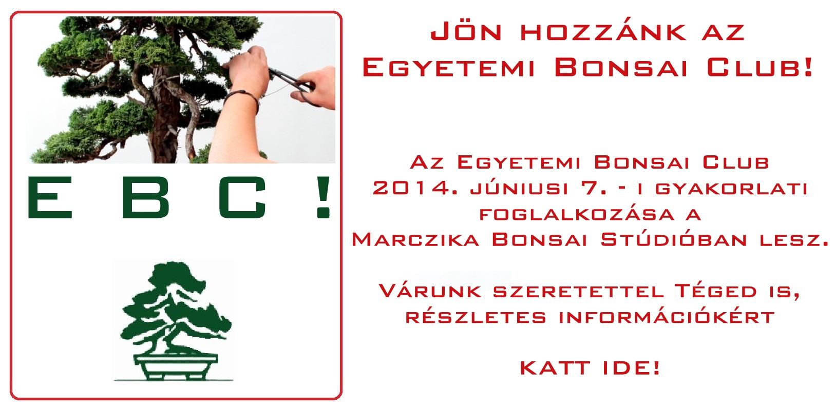 egyetemi bonsai club gyakorlati foglalkozas a marczika bonsai kerteszetben