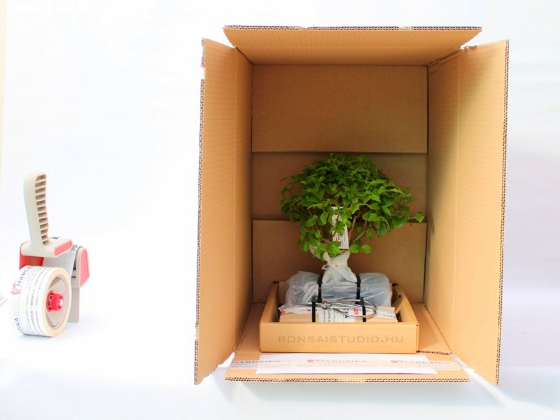 bonsai rendelese hazhozszallitasa bonsai webshoprol internetes bonsai vasarlas