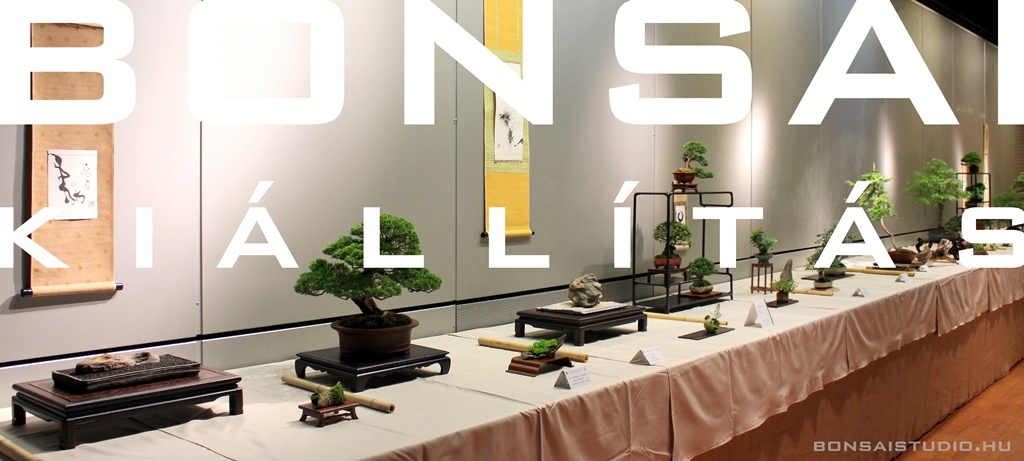 http://www.bonsaistudio.hu/help/h-111/Bonsai-kiallitas-az-Egyetemi-Bonsai-Club-rendezeseben/