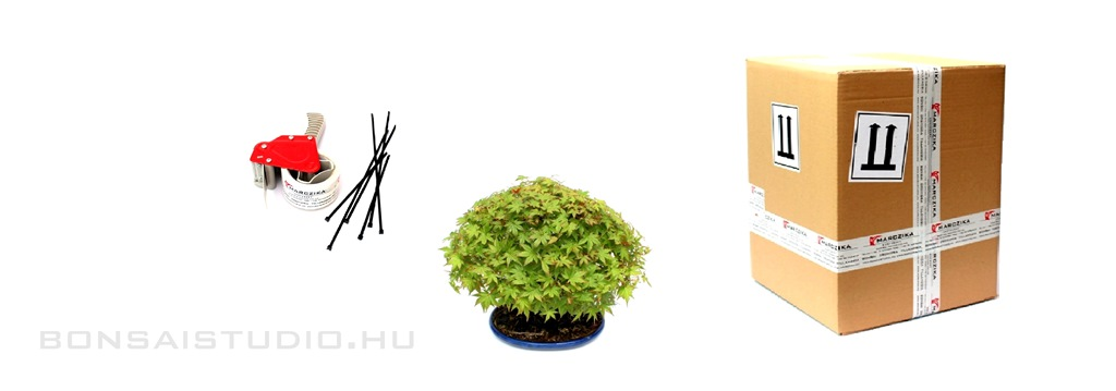 bonsai orchidea tillandsia hazhozszallitas