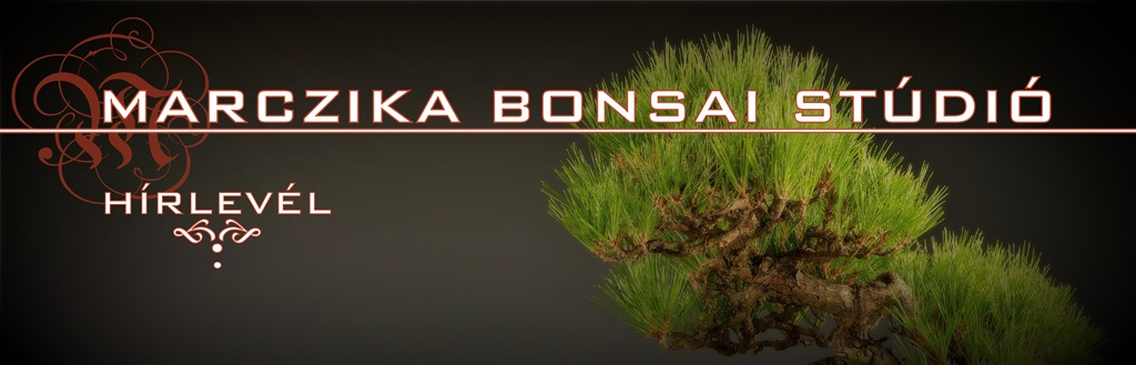 marczika bonsai studio kerteszet es webaruhaz tavaszvaro hirlevel