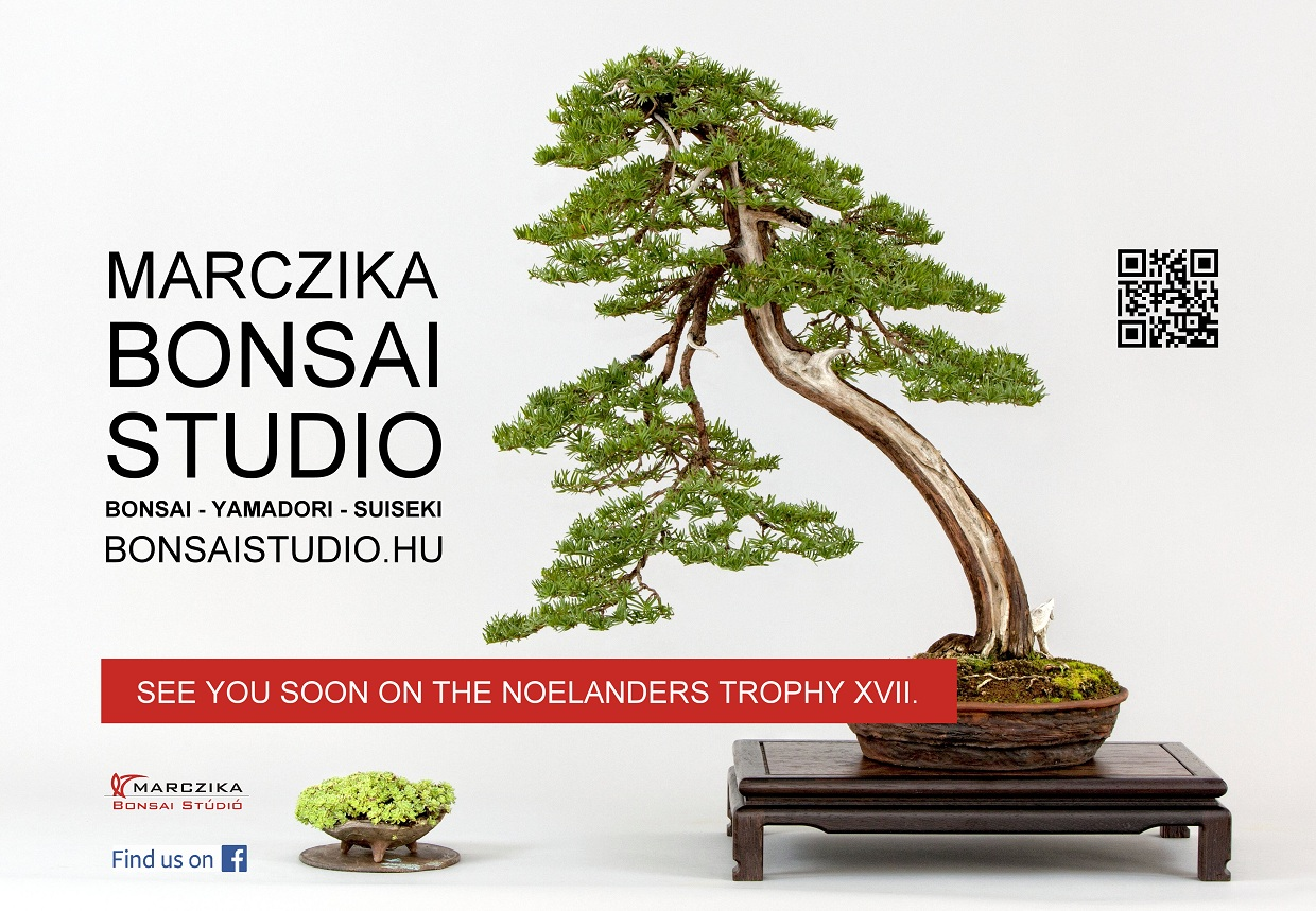 noelanders trophy exhibition and bonsai show traders marczika bonsai sudio