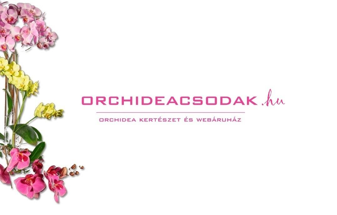 orchidea akciok es akcios orchideak az orchideacsodak kinalatabol a marczika kertészetben erden