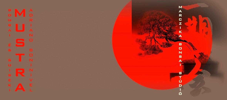 bonsai és suiseki kiállitás bonsai mustra a marczika bonsai studio rendezésében érd hungary